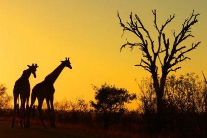 Best types of safari