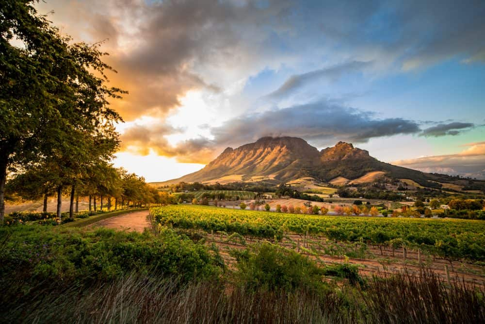 Stellenbosch - Top 10 places to visit in South Africa