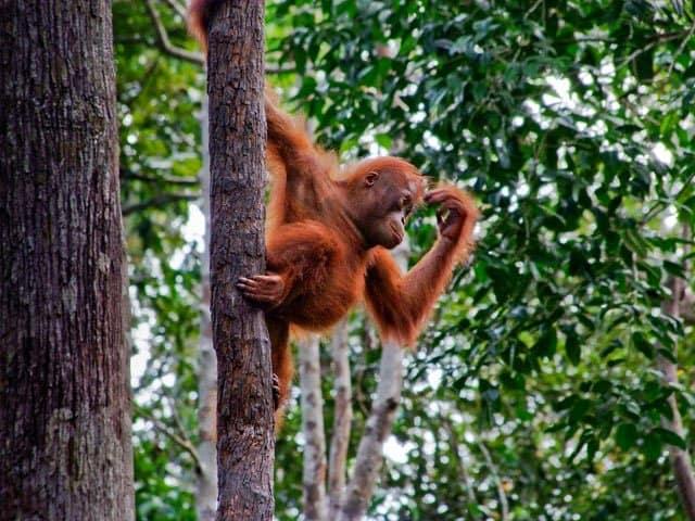 Honeymoon destination Borneo on GlobalGrasshopper.com