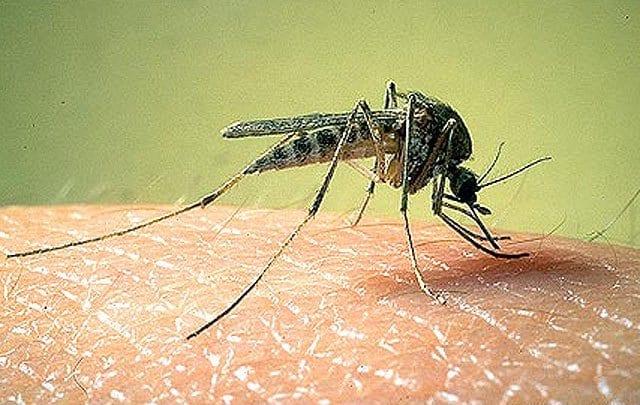 My 7 Links by GlobalGrasshopper Global Grasshopper