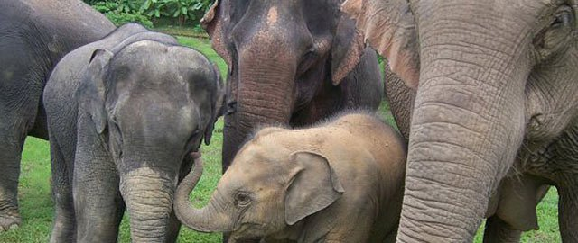 Boon Lot Elephant Sanctuary Thailand