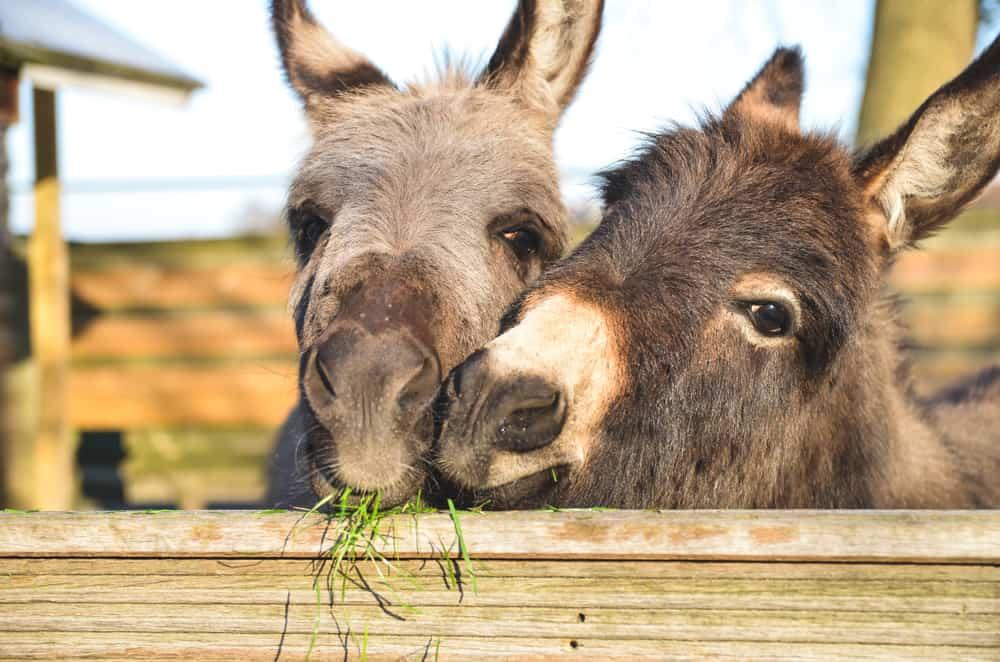 Donkey Sanctuary Devon England