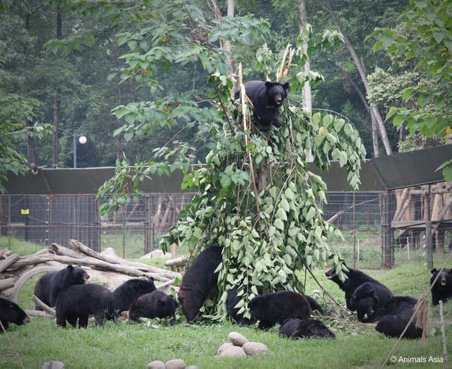 Chengdu Moon Bear Rescue Centre