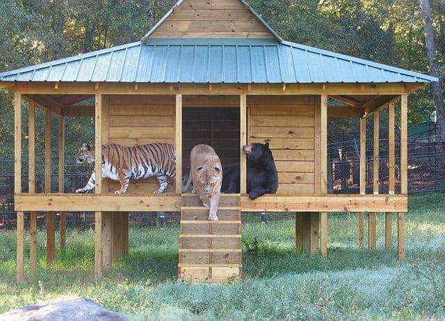 Noah's Ark Animal Sanctuary on GlobalGrasshopper.com