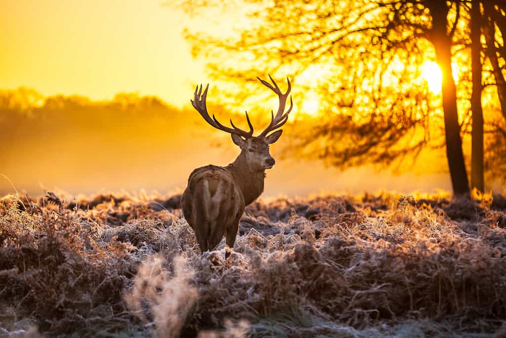 Richmond Park England