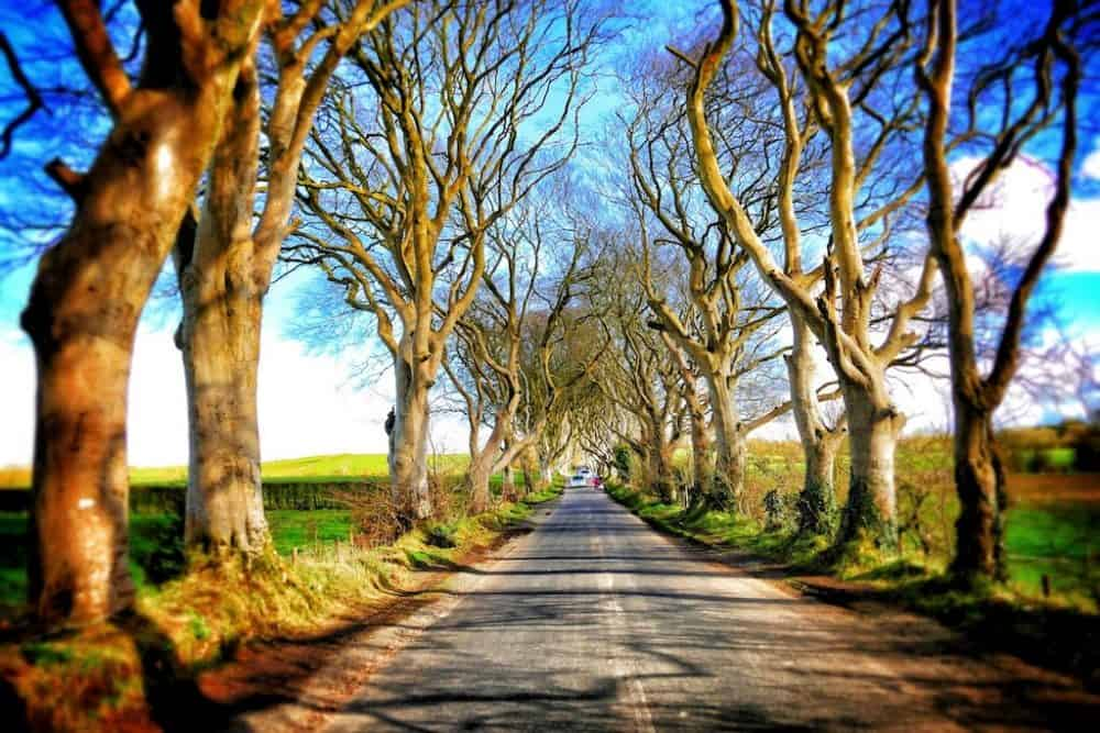 The Dark Hedges, a Game of Thrones location in Ireland
