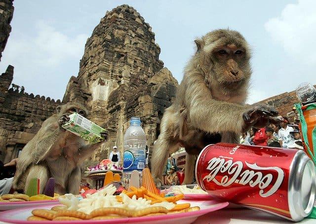 World's Weirdest Festivals: Monkey Buffet Festival on GlobalGrasshopper.com