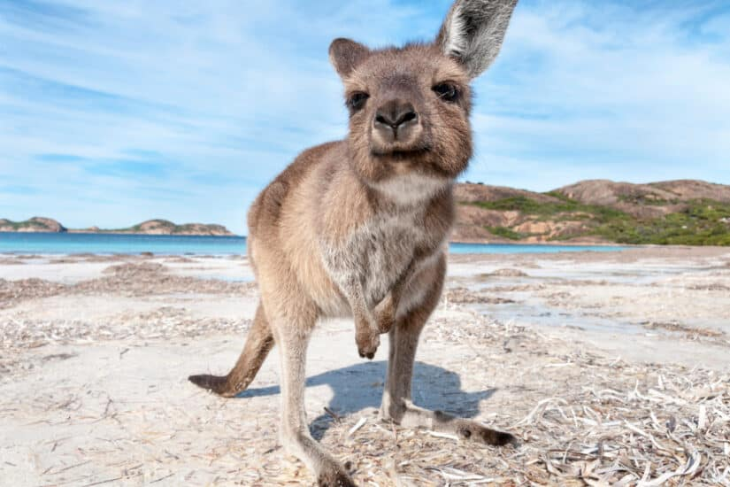 Best animals in Australia