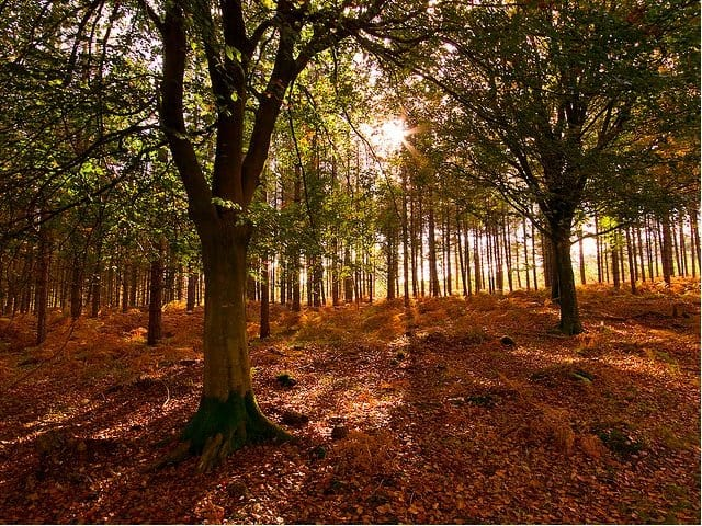 New Forest - Autumn breaks on GlobalGrasshopper.com