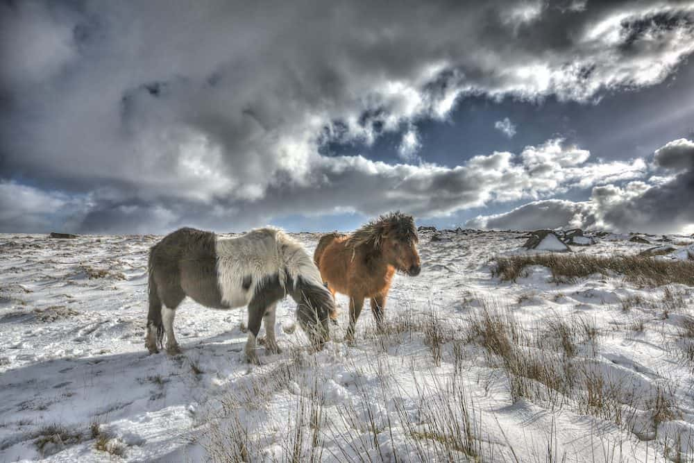Visiting Dartmoor in the winter