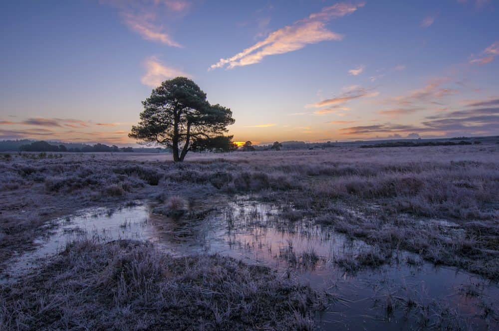 Visiting New Forest in the winter