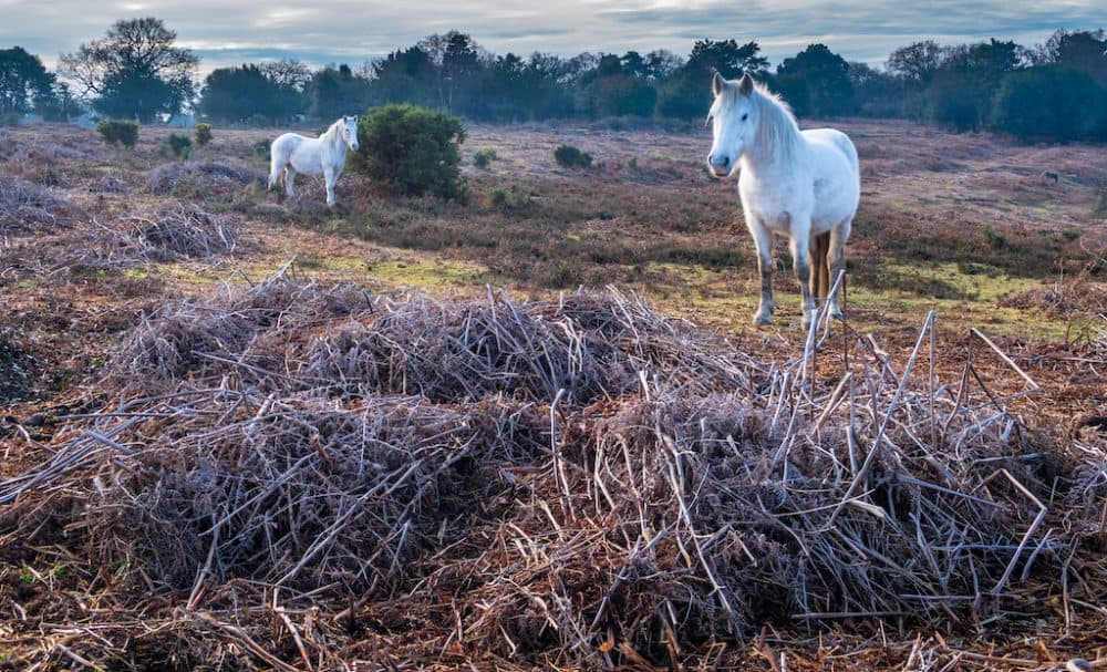 New Forest in the winter