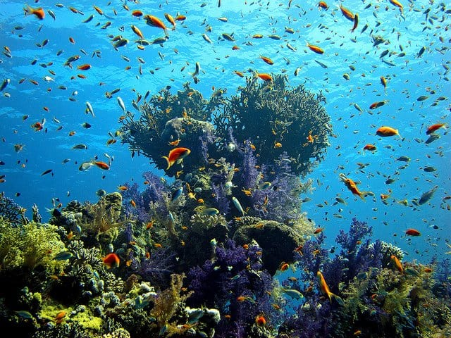 The Red Sea - beautiful places to visit in Egypt on GlobalGrasshopper.com