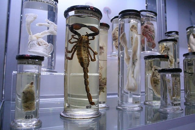 Hunterian Museum - Things to do in London on GlobalGrasshopper.com