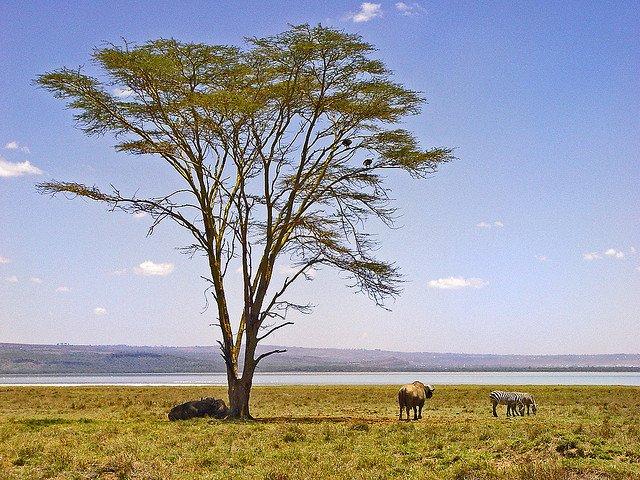 Wild weekend safari in Kenya Global Grasshopper
