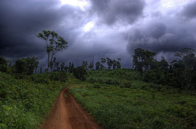 Jungle - exploring Cambodian wilderness on GlobalGrasshopper.com