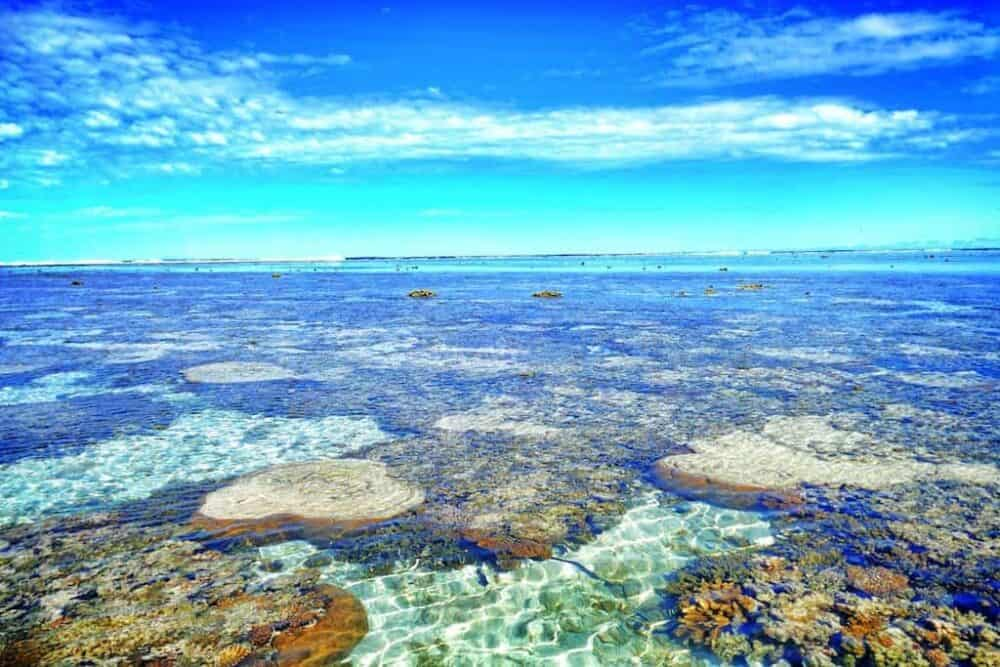 Reef Lady Elliot Island