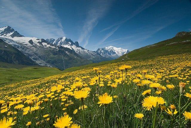 Alps Summer on GlobalGrasshopper.com