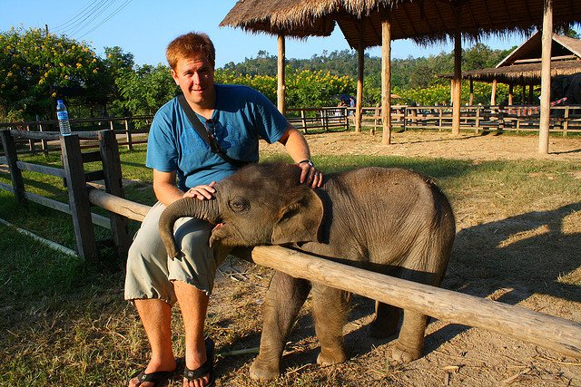 Helping Elephants - Volunteering Abroad on GlobalGrasshopper.com