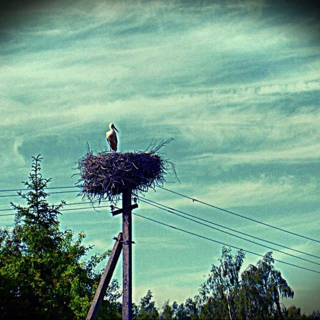 Stork in nest Lativa on GlobalGrasshopper.com