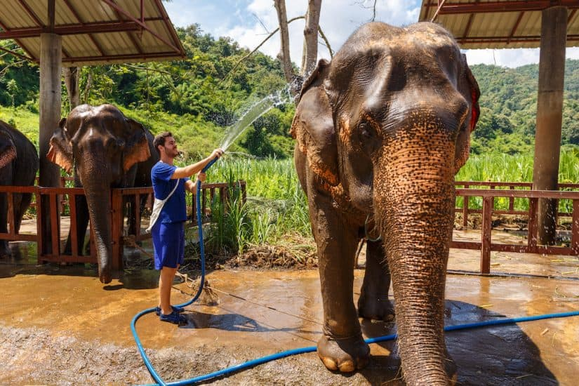 Elephant sanctuary volunteering