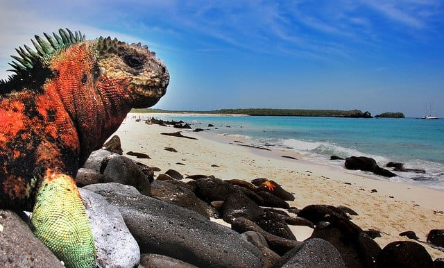 Galapogos Islands - Volunteer Projects on GlobalGrasshopper.com