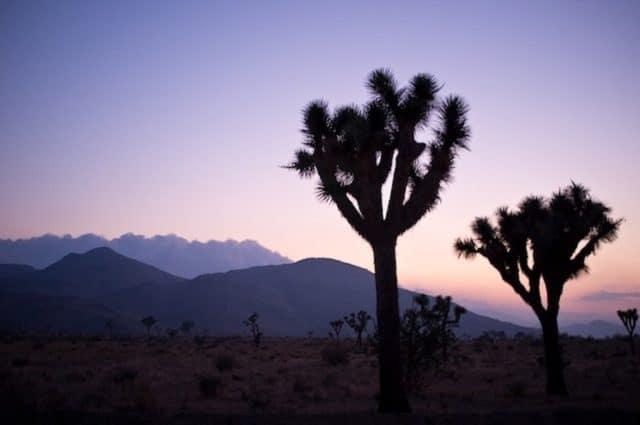 Joshua-Tree-National-Park sunset on GlobalGrasshopper.com