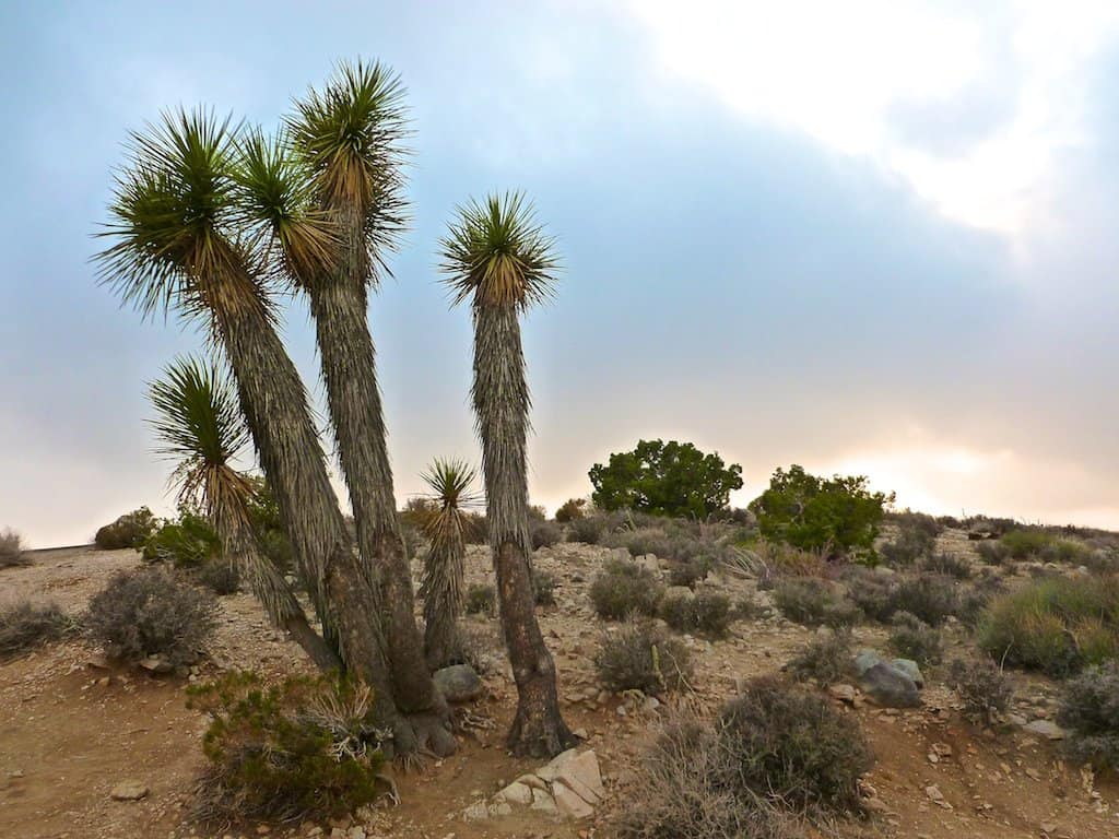 In BIG pictures: our soul soothing California road trip Global Grasshopper