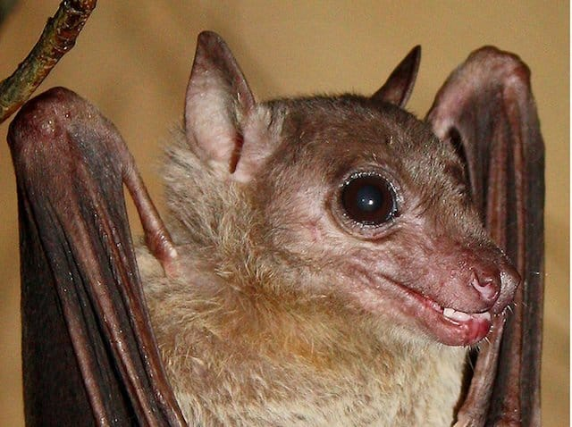 Fruit Bat - an interview with Simon Reeve on GlobalGrasshopper.com