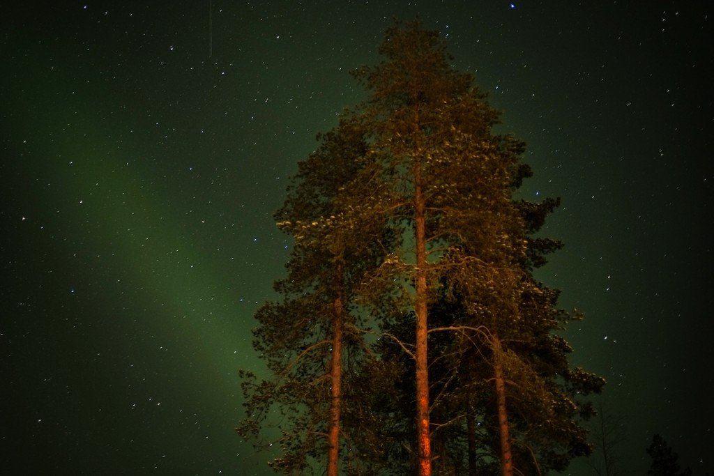 Tree and Lights Finnish Lapland