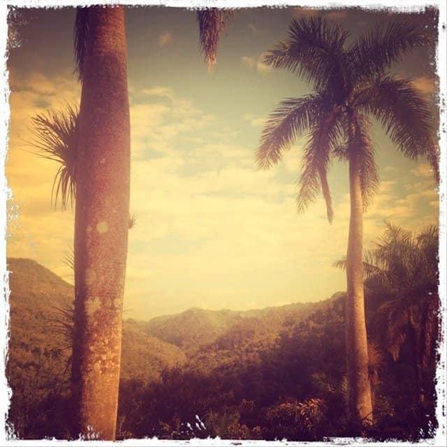Cuba Palms