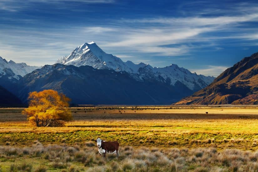 Top 10 of the best road trips in Australia and New Zealand