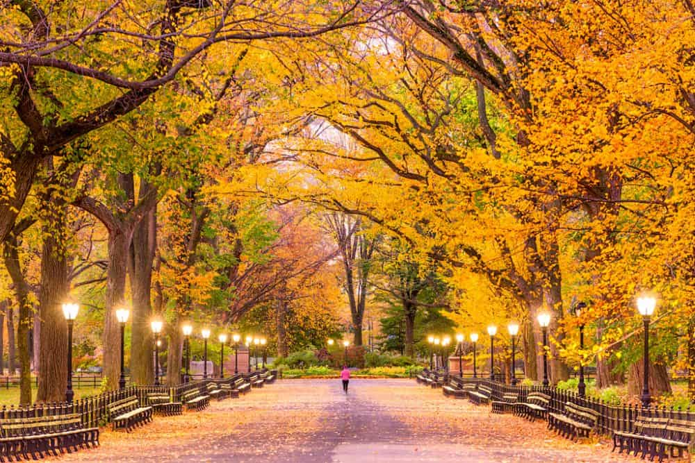 Central Park Photography New York