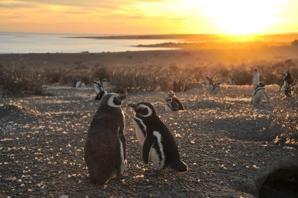 Punta Tombo Penguin Reserve