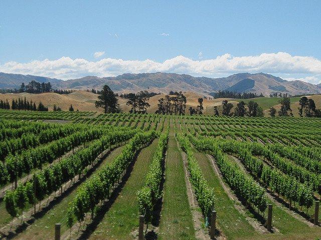 Wine region New Zealand