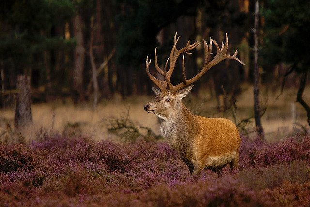 Hoge Veluwe National Park - most beautiful places to visit in Holland