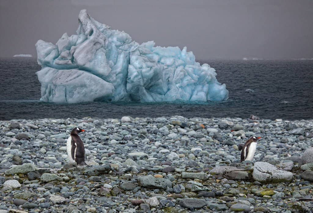 An iceberg and penguins in Antarctica
