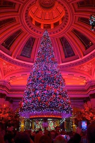 Dome Tree