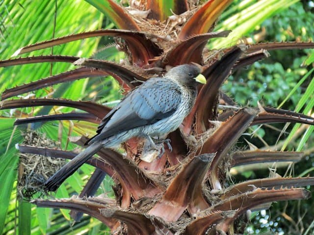 A twitcher's paradise: bird (and monkey) watching in the Gambia Global Grasshopper