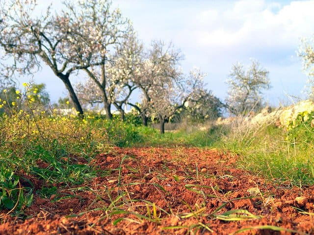 Beautiful places: the almond blossom route, Ibiza Global Grasshopper
