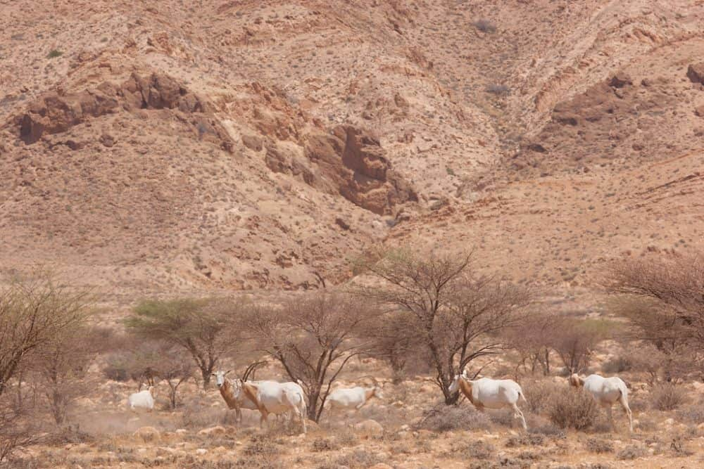 Bou-Hedma National Park