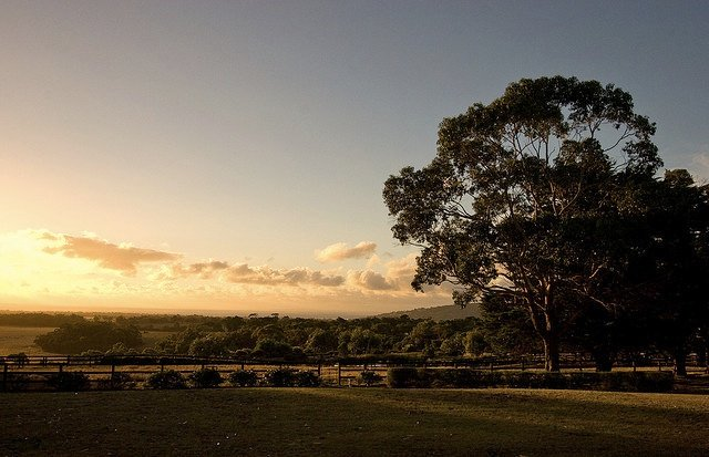 Australia's most beautiful wine tasting spots Global Grasshopper
