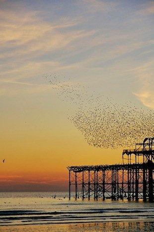Brighton Pier copy