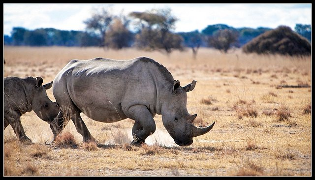 Rhino Sanctuary Bostwana