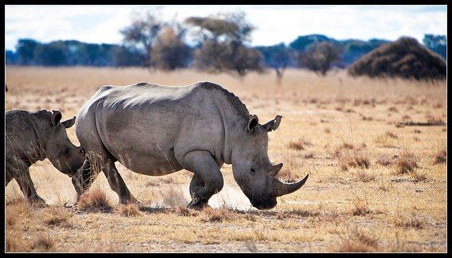 Rhino Sanctuary Bostwana