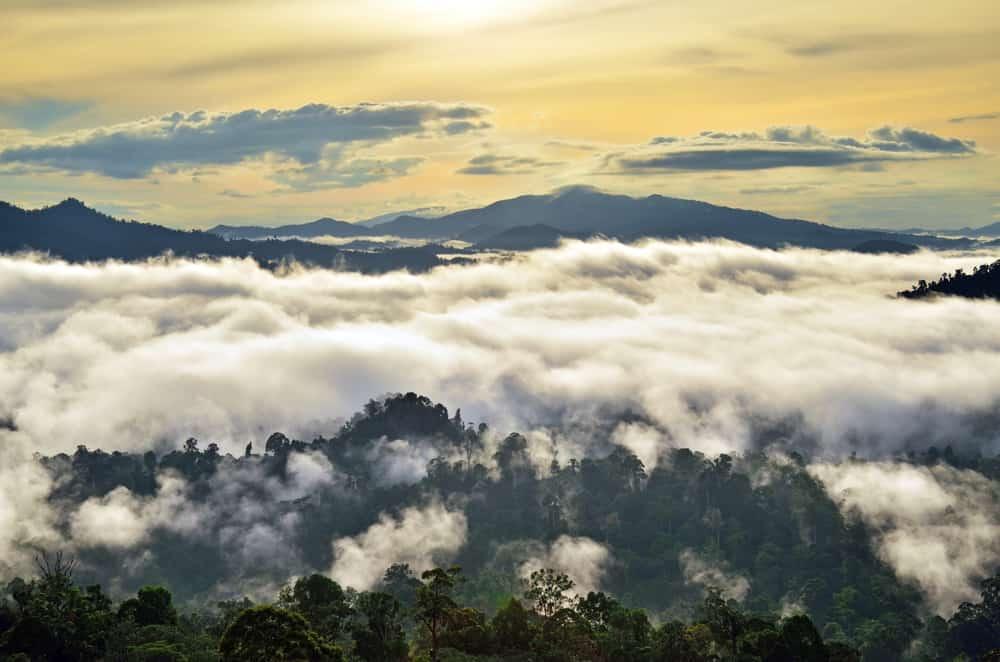 Danum Valley Malaysia