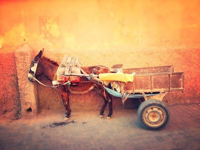 Marrakech Medina Donkey
