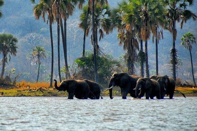 Liwonde-National-Park