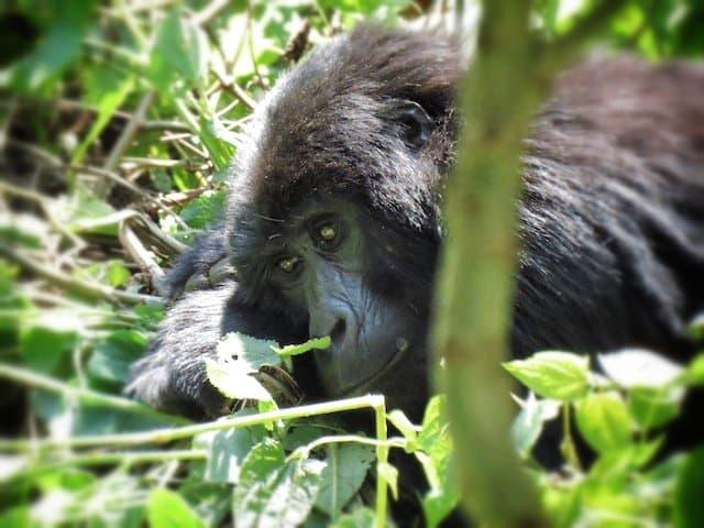 Exploring Uganda: from lazy days to raging waves Global Grasshopper