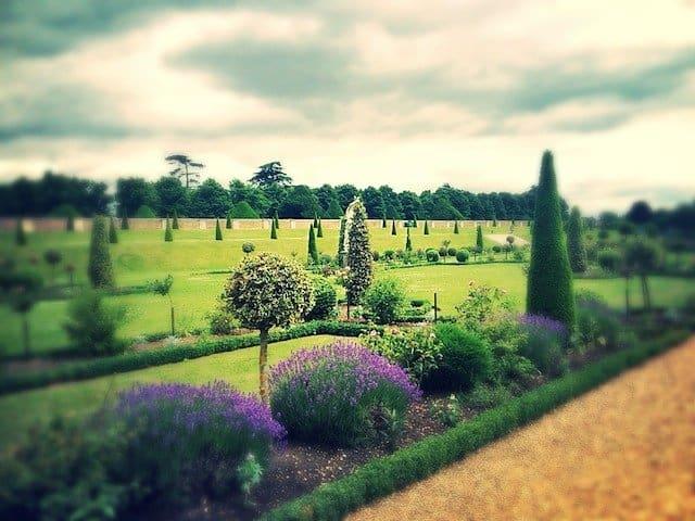 Hampton Court flowers